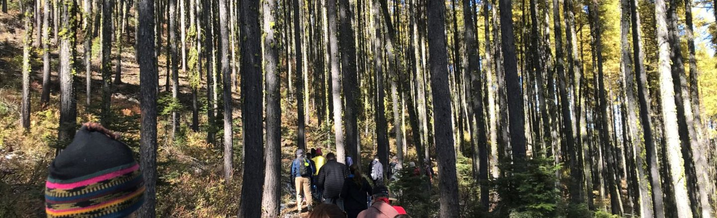 Forest grove hiking